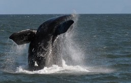 Pollution, whales prompt shipping slow-down in SoCal