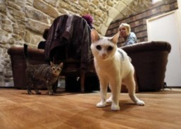 San Francisco set to welcome its first cat café