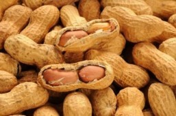 Eating peanuts helps infants avoid allergy, even after pause