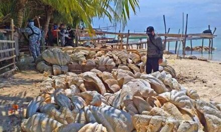 4 suspects nabbed in Palawan for selling 200 tons of giant clams worth P1.2B
