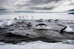 Conservationists call for huge Antarctic marine reserve