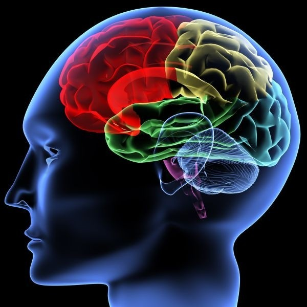 Brains of addicts are inherently abnormal: study