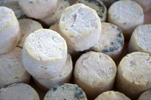 Fish-infused cheese, anyone?