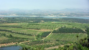 The wines of China: a look at the country's wine-producing regions