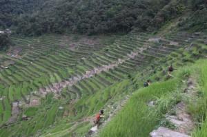 Philippines rice terraces off endangered list: UN