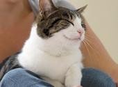 Secrets to Raising a Happy, Healthy Cat