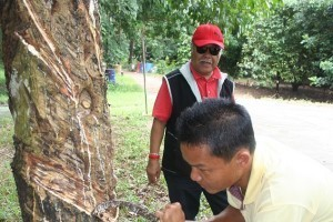 Rubber industry aims to double production by 2016