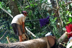 Illegal logging hotspots down to 31 – Paje
