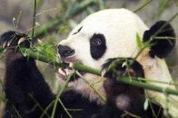 China approves jail for rare wild animal eaters: Xinhua