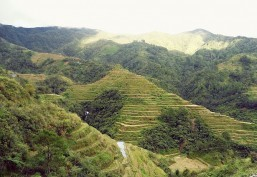 PHL' famed rice terraces face modern threats