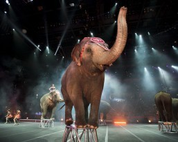 Extreme thrills, exotic animals and extraordinary performers