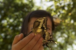 Native California Butterflies Taking Flight in NHM's 'Butterfly Pavilion'