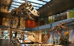 Explore the Natural History Museum of Los Angeles with Weekend Balita