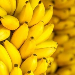 'Super' banana to face first human trial