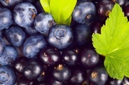 Blueberries could help fight gum disease, reduce antibiotic use