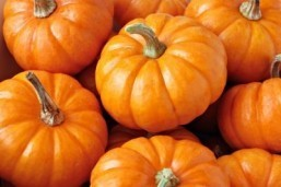 Fall harvest comes to JFK Airport in pop-up farmer's market