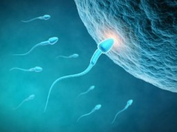 Male birth control pill could one day follow fertilization discovery
