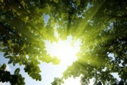 Sunlight helps blood pressure risk: study