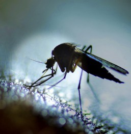 Colombia reports more than 47,700 Zika cases